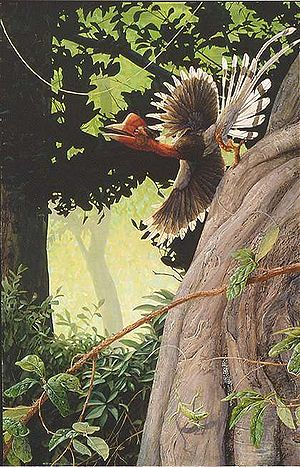 Helmeted hornbill - Illustration of a mature male bird, distinguishable its casque shape and red throat area
