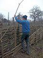 Budowa płotu z leszczyny - Nidż, Azerbejdżan.jpg