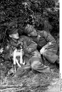 Bundesarchiv Bild 101I-721-0387-09A, Frankreich, Luftwaffensoldaten mit Hund