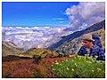 Bunga Edelweis Gunung Rinjani Lombok.jpg