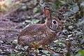 Bunny (44994556052).jpg
