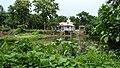 Buro-Ma Mandir Area - Manosapota - Simurali - Nadia 20170730121403.jpg