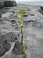 Burren 2008-07-05 12-24.jpg
