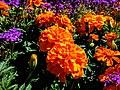 Butchart Gardens - Victoria, British Columbia, Canada (29325633041).jpg
