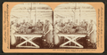 Butchering salmon, interior of a canning establishment, Astoria, Oregon, U.S.A, by Keystone View Company.png