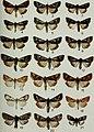 Butterflies and moths of Newfoundland and Labrador - the macrolepidoptera (1980) (19890191703).jpg