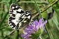 Butterfly (19582139634).jpg