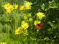 Butterfly and flowers (High Park) - panoramio.jpg