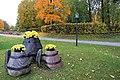 Cēsis,rudens. - panoramio (1).jpg