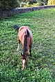Caballos - Cabalos - Bertamirans - Ames - 003.jpg