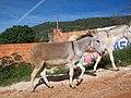 Caetité - BA - Distr. Brejinho - Jegues - ótimo para montaria e cargas - panoramio.jpg