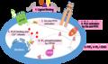 Calcium Signaling Pathway.png