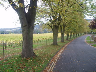 Surrey Hills AONB - Residential roads in Dorking, bordering vineyards on the side of the North Downs