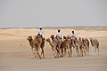 Camel Training (3678523749).jpg