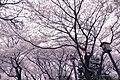 Canopy (148455225).jpeg