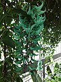 Canopy Walk - The Tropics - US Botanic Gardens 04.jpg