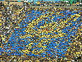 Card stunt at UCLA at Cal 10-25-08 3.JPG