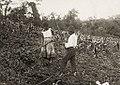 Casal trabalhando em plantação de milho - Vincenzo Pastore.jpg