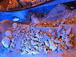 Castello di bodrum, ricostruzione di nave antica 03.JPG