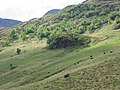 Cattle in Gleann Meadail - geograph.org.uk - 14668.jpg