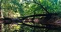 Cedar Creek (21dec3ae-38f3-4d29-80a3-1f1efb77d8c9).jpg