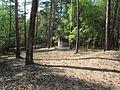Cesta Lužná II - Hlavačov (9).jpg