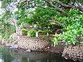 Chalakudy River @ Ezhattumukam - panoramio (1).jpg