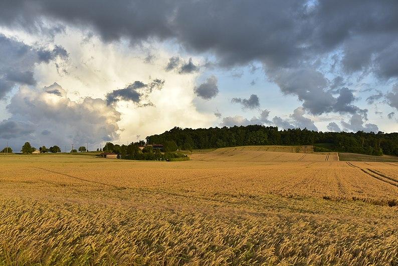 Champs de blé sous une éclaircie (29565497533).jpg