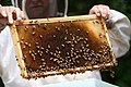 Charlie Brandts, a White House carpenter as well as beekeeper collects the first batch of honey.jpg