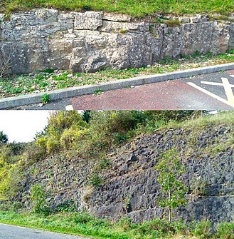 Chepstow - Two types of limestone exposed by the link road between Bulwark and the M48.