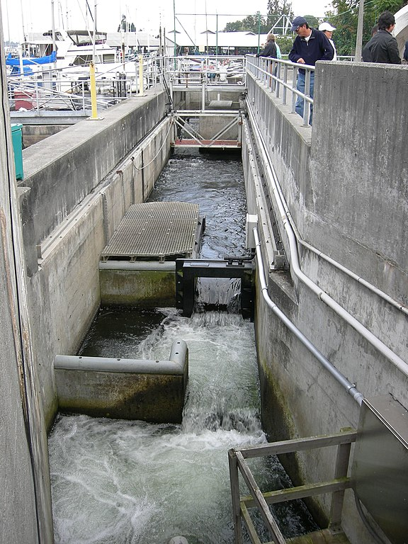 File chittenden locks fish ladder wikimedia commons for Ballard locks fish ladder