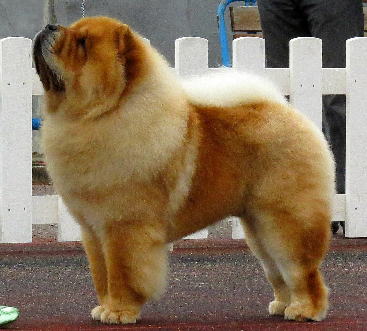Medium Dog Breeds With Pictures