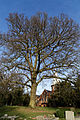 Church of St Mary Theydon Bois Essex England - churchyard tree.jpg