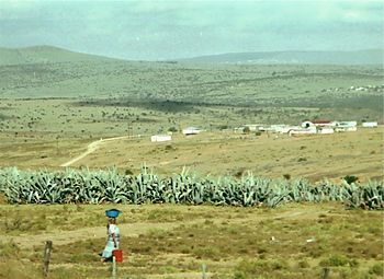 A rural area in Ciskei, one of the apartheid e...