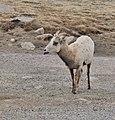 Clear Creek County, CO, USA - panoramio (9).jpg