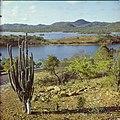 Collectie Nationaal Museum van Wereldculturen TM-20029695 Zicht op het Gotomeer, met cactus op de voorgrond Bonaire Boy Lawson (Fotograaf).jpg