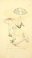 Coloured Figures of English Fungi or Mushrooms - t. 246.png