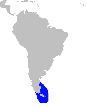 Commerson's dolphin - Image: Commerson's dolphin South America distribution