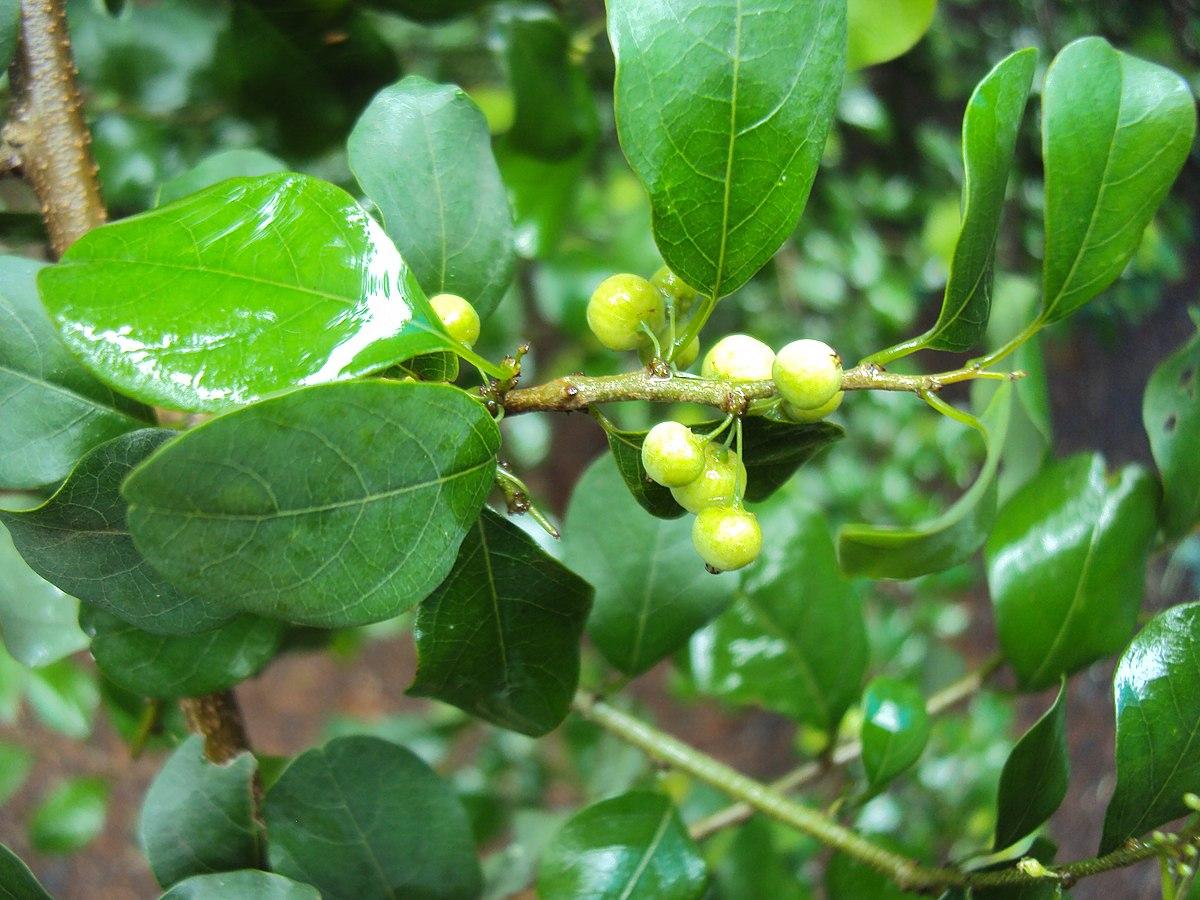 L 248 Nneordenen Wikipedia