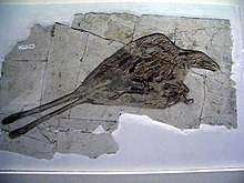 White slab of rock left with cracks and imprssion of bird feathers and bone, including long paired tail feathers