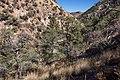 Cooney Canyon - Flickr - aspidoscelis (1).jpg