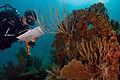 Coral Bleaching (14274360077).jpg