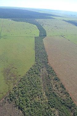 Corredor Florestal - Pontal do Paranapanema.jpg