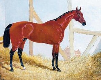 Cotherstone (horse) - Cotherstone. Contemporary painting.