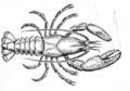 Crayfish (PSF).png