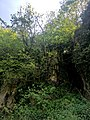 Creswell Gorge, Creswell Craggs, Notts (65).jpg