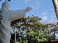 Cristo Salvador de Sertãozinho, em construção. Içamento para o pedestal da estátua do Cristo no Morro do Vanzela. A estátua pesa 40 toneladas e mede 18 metros de altura. Devido à importância rel - panoramio.jpg