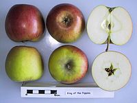 Cross section of King of the Pippins, National Fruit Collection (acc. 1972-030).jpg