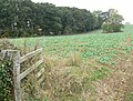 Croxfield Spinney, Leicestershire - geograph.org.uk - 587043.jpg