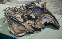 Cryolophosaurus ellioti skull.jpg
